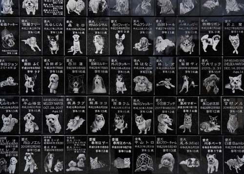 سنگ قبرهای مخصوص سگهای خانگی مُرده در گورستان