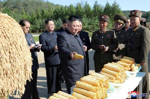 بازدید رهبر کره شمالی از محصول ذرت مزرعهای در کره شمالی/ خبرگزاری رسمی کره شمالی