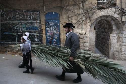یهودیان ارتدوکس در شهر قدس در حال حمل برگ نخل برای استفاده در آیین یهودی عید