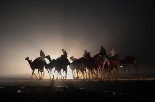 مسابقات شترسواری در کویت/ خبرگزاری فرانسه