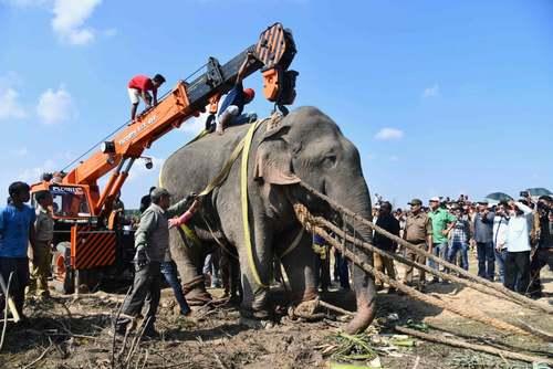 انتقال یک فیل وحشی به جنگل در آسام هند. این فیل در عرض 1 روز 5 روستایی را زیر گرفت و کُشت./ خبرگزاری فرانسه