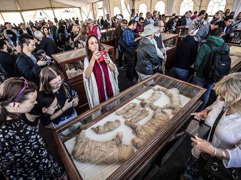نمایش دهها مومیایی حیوانات در مصر. این مومیاییها که در کاوشهای باستان شناسی یک تیم مصری کشف شدهاند روز شنبه در معرض نمایش قرار گرفتند./ خبرگزاری فرانسه