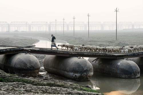 عبور گله گوسفند از روی یک پل چوبی در شهر الله آباد هندوستان/ خبرگزاری فرانسه