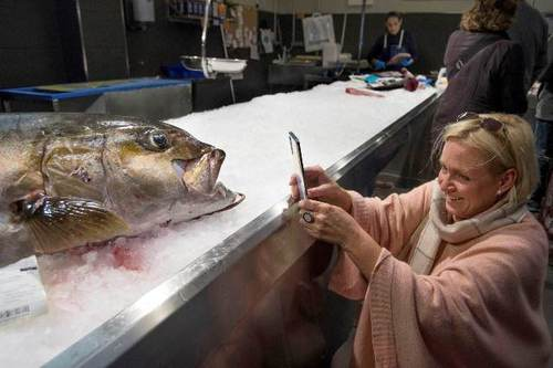 بازار ماهی در بندر