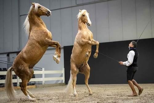 یک رام کننده و تمرین دهنده اسب در حاشیه نمایشگاهی در شهر هانوفر آلمان/ خبرگزاری فرانسه