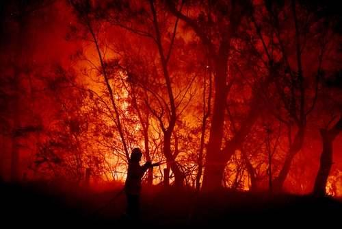 ادامه آتشسوزی جنگلی در استرالیا/ آسوشیتدپرس
