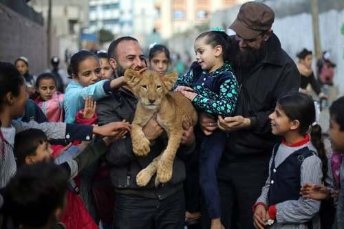 بازی با توله شیر در اردوگاه آوارگان در منطقه رفح در جنوب نوار غزه/ رویترز
