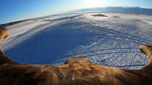 تصویر دوربین نصب شده به یک عقاب در قزاقستان/ رویترز