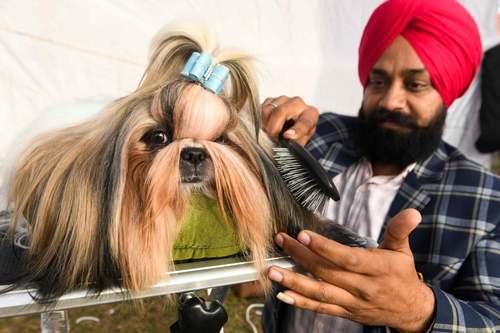 مسابقات انتخاب بهترین سگ خانگی در