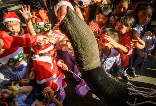 دریافت هدایای کریسمس از فیل در مدرسهای در تایلند/ خبرگزاری فرانسه و آسوشیتدپرس