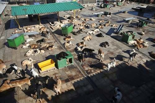 مرکز نگهداری سگهای ولگرد (وفا) در منطقه