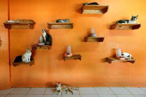یک مرکز نگهداری گربهها در