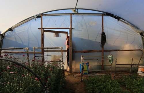 یک گلخانه در نوار غزه/ APA