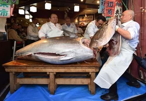 بریدن یک ماهی تون در رستورانی در توکیو/ خبرگزاری فرانسه