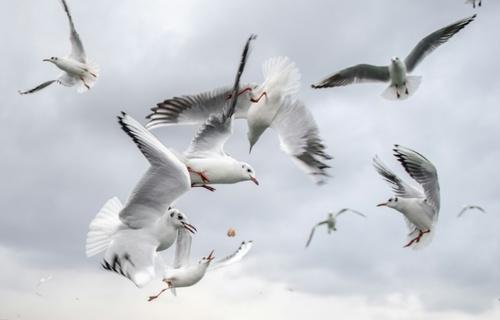 پرواز مرغان دریایی در ساحل استانبول/ خبرگزاری فرانسه