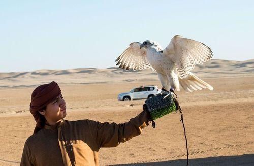 آموزش با شاهین شکاری در صحرای