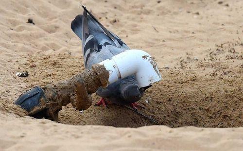 پرنده در حال آب خوردن از لوله آب در شهر دوبی/ گلف نیوز