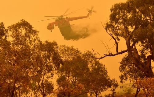 خاموش کردن آتش سوزی جنگلی در جنگلهای جنوب شهر