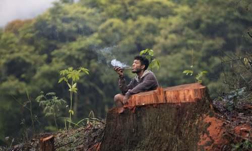یک مرد بومی برزیل در جنگلهای حومه شهر