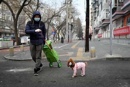 ماسک زدن به حیوانات خانگی از بیم ابتلا به ویروس کرونا/شهر پکن/ خبرگزاری فرانسه