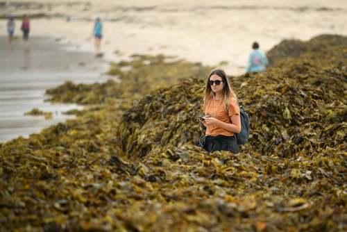 قدم زدن زن استرالیایی در میان توده بزرگی از جلبک دریایی در ساحل سیدنی/ EPA