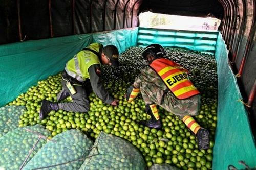پلیس کلمبیا در حال تفتیش بار یک کامیون حمل میوه/ خبرگزاری فرانسه