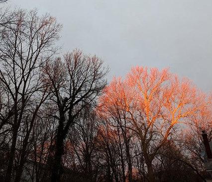طلوع خورشید که بر روی این درخت افتاده است و منظرهای دیدنی خلق کرده است.