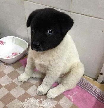 تو عمرتون سگ به این نازی دیده اید؟!