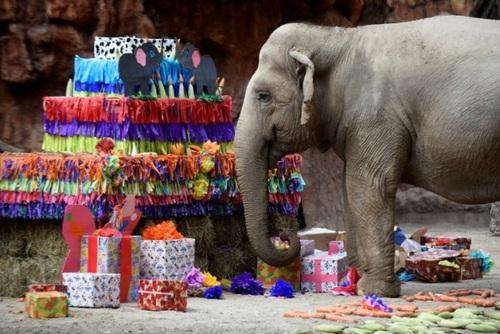 کیک میوهای برای جشن تولد 59 سالگی فیل باغ وحش