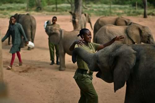 یک مرکز نگهداری فیل در کنیا/ خبرگزاری فرانسه