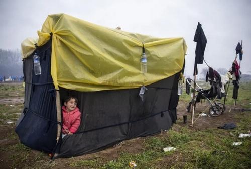 چادر پناهجویان در مرز ترکیه و یونان/ خبرگزاری آناتولی