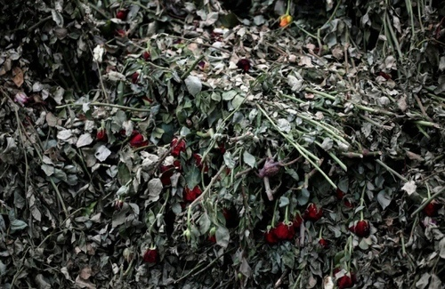 پلاسیدگی صدها هزار شاخه گل رُز پرورش داده شده در کنیا. این گلها که با پرواز به هلند و از آنجا به سراسر اروپا صادر میشوند به دلیل بحران کرونا روی دست باغدارها مانده است./ رویترز