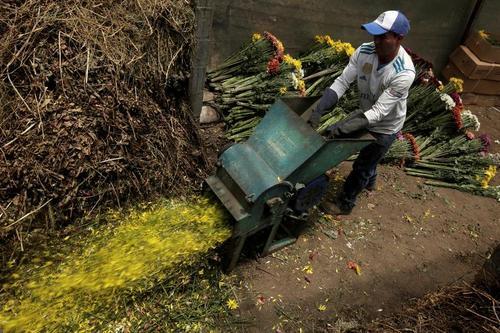 امحای شاخه گلهای پرورشی در کاستاریکا به دلیل عدم امکان صادرات/ رویترز