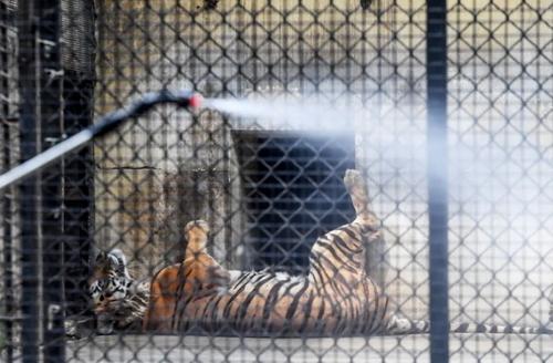 ضدعفونی باغ وحش  شهر کلکته هند/ خبرگزاری فرانسه