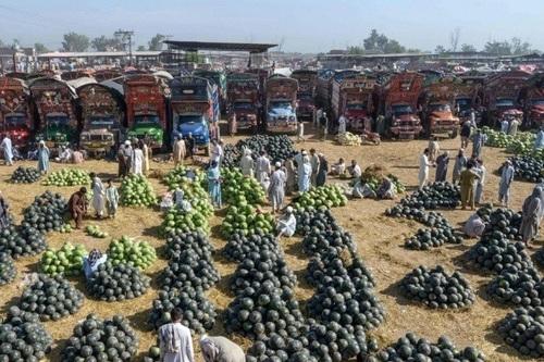 فروش هندوانه در بازار میوه شهر پیشاور پاکستان/ خبرگزاری فرانسه