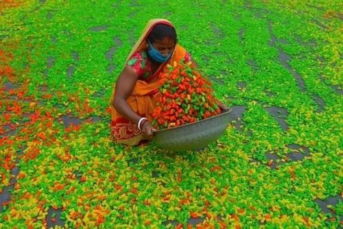 یک مرکز تولید اسنک هندی (پفک هندی) در