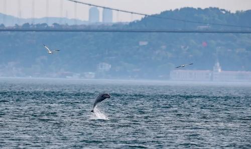 تنگه بسفر در استانبول ترکیه/ خبرگزاری آناتولی