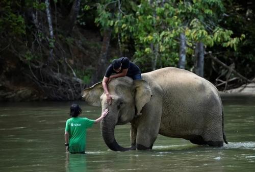 شستشوی فیل در رودخانه/ اندونزی/ خبرگزاری فرانسه