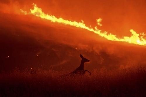 آتشسوزی جنگلی در ایالت کالیفرنیا آمریکا/آسوشیتدپرس