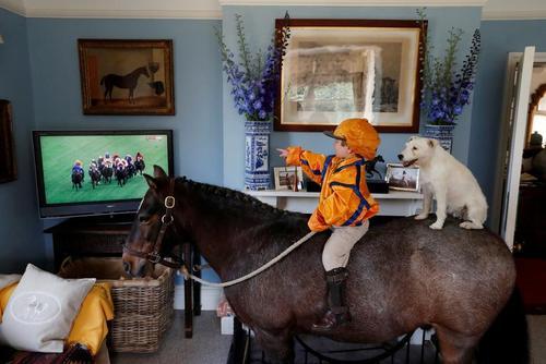 کودک خردسال 3 ساله بریتانیایی با سگ خود روی اسبش نشسته و مسابقات اسبسواری را از تلویزیون تماشا میکند./