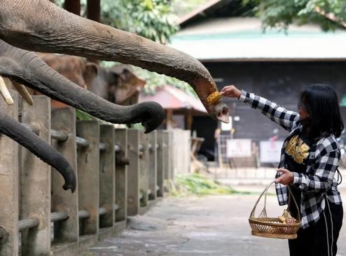 بازگشایی یک مرکز نگهداری از فیل در استان
