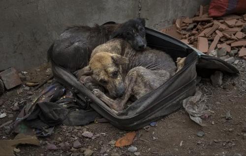 پناه بردن دو سگ دوره گرد در هوای زمستانی شهر