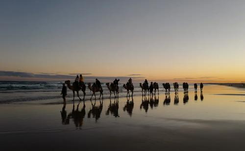 گردشگران داخلی در حال شترسواری در سواحل استرالیا/ گتی ایمجز