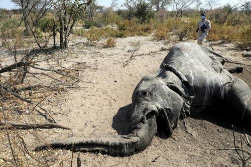 مرگ عجیب و مشکوک صدها فیل در دلتا
