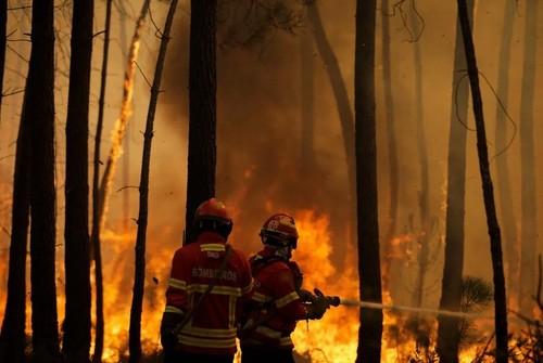 آتشسوزی جنگلی در پرتغال/ EPA