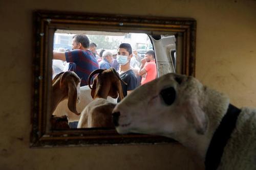 بازار فروش احشام برای عید قربان در شهر