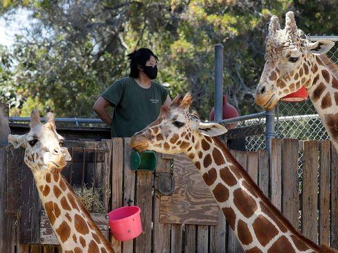 باغ وحش اوکلند در ایالت کالیفرنیا آمریکا/ آسوشیتدپرس