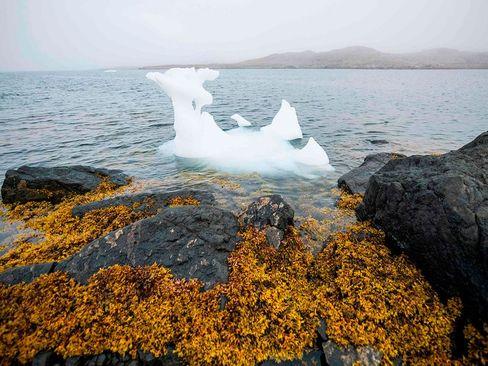 یخهای قطبی آب شده در سواحل جزیره