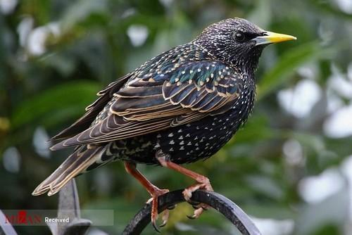 دنیای رنگارنگ پرندگان (عکس)