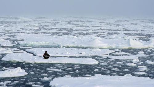 تظاهرات نمادین یک فعال محیط زیستی 18 ساله روی یخ های قطبی در حال آب شدن در اقیانوس منجمد شمالی/ رویترز